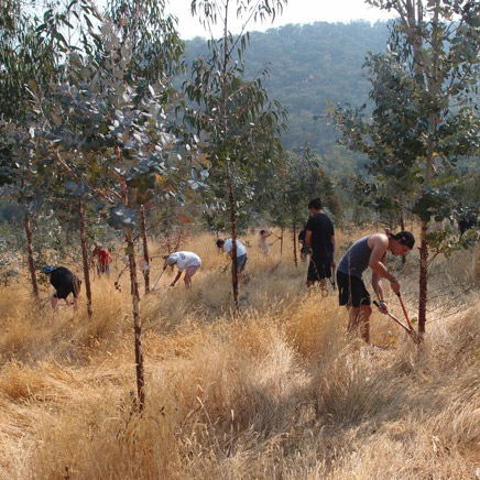 Students Pruning Trees