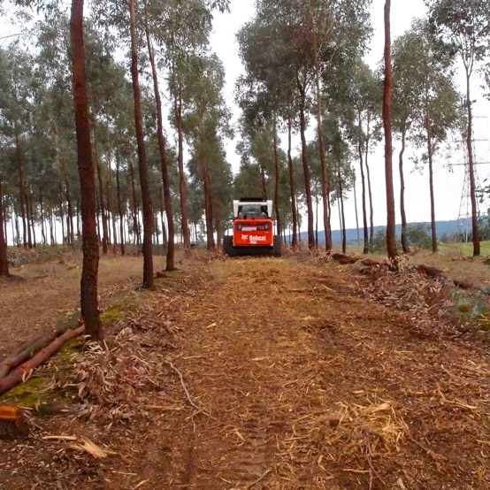 Farm Forestry Services